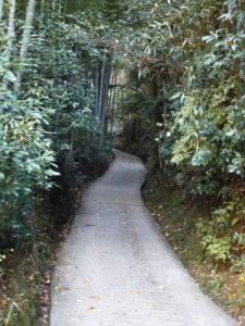 裏山の山道
